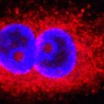 Οι πρωτεΐνες βρίσκουν την έξοδο