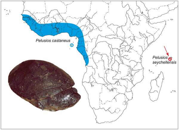 Κατανομή των Pelusios (Πηγή: PLOS One)