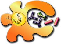 Ανοσοβιολογικό σύστημα - 1