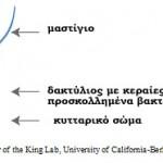 Πολύκυτταροι – μονοκύτταροι