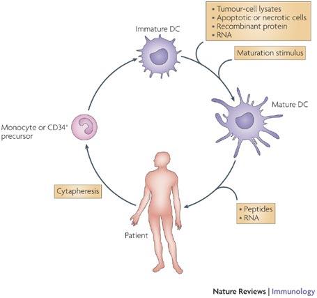 Κυτοκίνες - Ανοσοβιολογία
