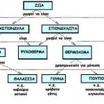 Εννοιολογικοί Χάρτες