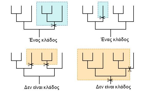 phylogenetics02