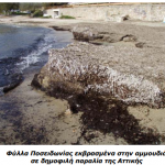 Καθαρές θάλασσες; Τα φύκη ξέρουν…