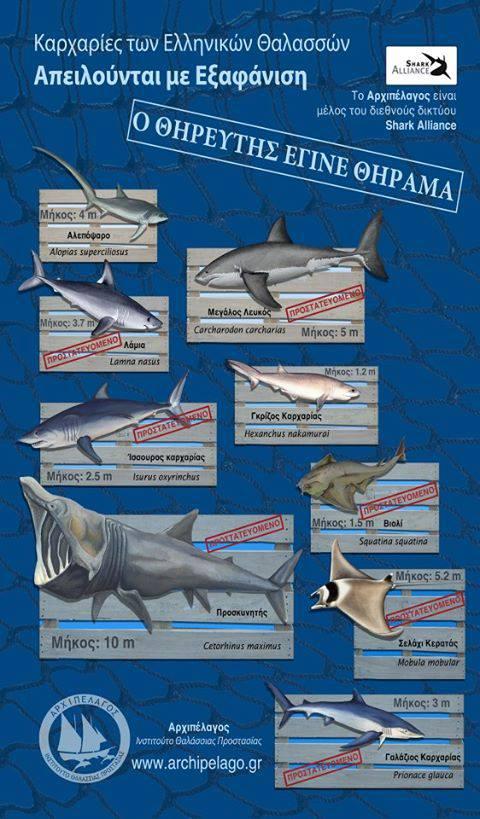 Πηγή: Αρχιπέλαγος Ινστιτούτο Θαλάσσιας Προστασίας