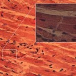 Τύποι μυών – Μυική συστολή
