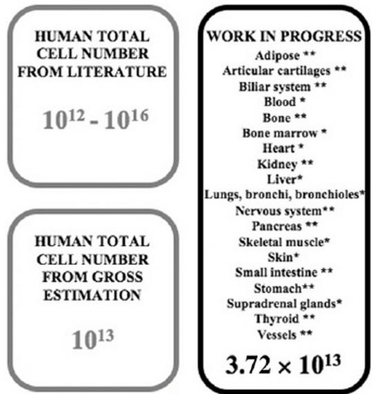 Συνολικός αριθμός κυττάρων στον ανθρώπινο οργανισμό. Σύγκριση αριθμών από τρεις διαφορετικές πηγές: από την υπάρχουσα βιβλιογραφία (πάνω αριστερά), από έναν απλό υπολογισμό βάση του όγκου του σώματος και του μεγέθους των κυττάρων (κάτω αριστερά) και από την εργασία της Bianconi και των συνεργατών της (δεξιά). (Πηγή: Biancone et al, Annals of Human Biology)