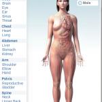 BodyMaps: τρισδιάστατη εξερεύνηση του ανθρώπινου σώματος