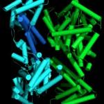 Κινήσεις ενός νανοκινητήρα μεταφέρει πρωτεΐνες έξω από το κύτταρο