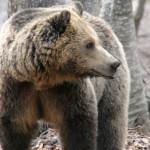 Ξύπνησαν οι αρκούδες στο Καταφύγιο και περιμένουν τους επισκέπτες