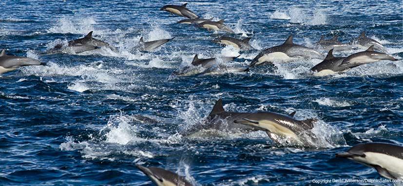 Πηγή: Capt. Dave's Dolphin & Whale Watching Safari.