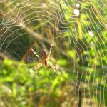 Βιοχημική διεργασία παραγωγής μεταξιού από αράχνες