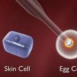 Πυρηνική μεταφορά σωματικού κυττάρου – Κλωνοποίηση