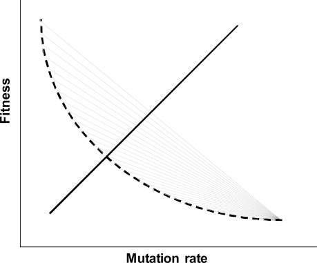 fitness-mutation rate