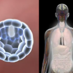 Κυτταρική διαφοροποίηση