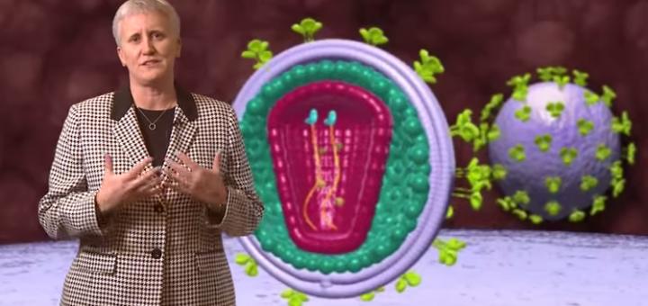 HIV Life Cycle Animation