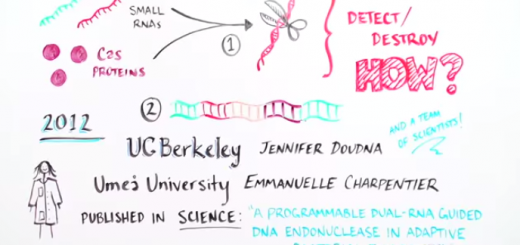 CRISPR-cas-video