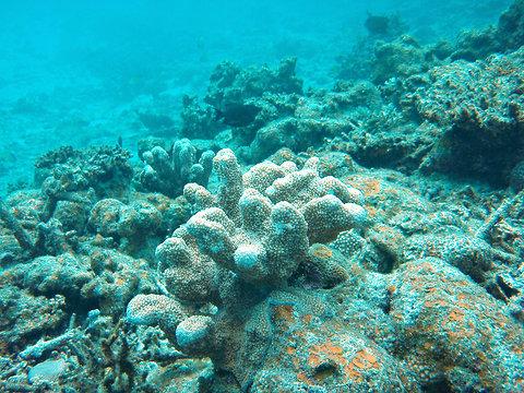coral-acidification