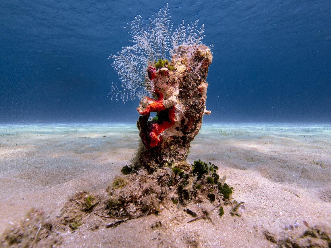 9._A_newborn reef_resized_1