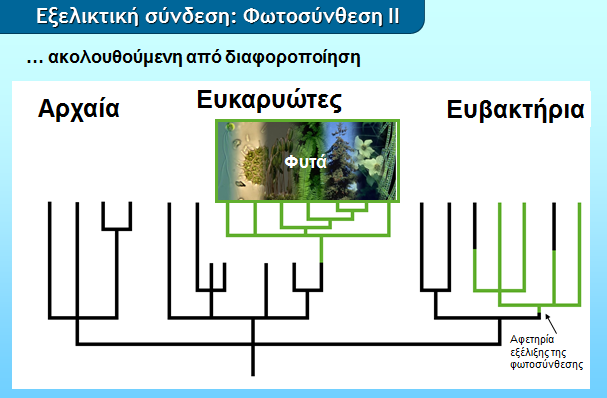 evolutionconnection_photosynthesis2_gr