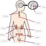 Μάθε για τις ορμόνες σου