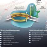 Ηθικά και Νομικά ζητήματα με τη χρήση της τεχνικής CRISPR