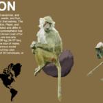 Διαδραστική εφαρμογή με σκελετούς ειδών